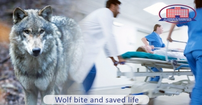 Patient bitten by a wolf feels well and was discharged from the clinic